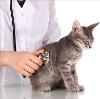 Ветеринарные клиники в Улетах